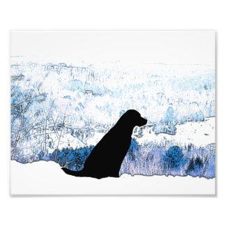 Labrador noir - sur une montagne photo d'art