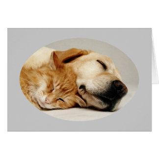 Labrador retriever et carte de chat