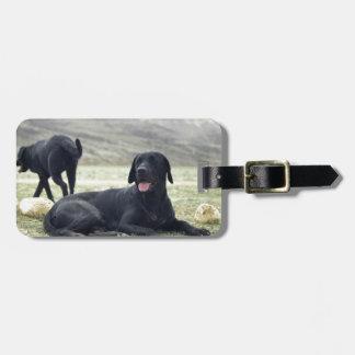 Labrador retriever noir personnalisable étiquette à bagage