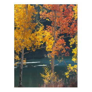 Lac beaver (lacs mesa) en automne carte postale