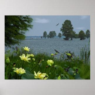 Lac lotus avec des hirondelles posters