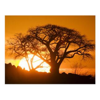 L'Afrique, Botswana, coucher de soleil silhouette Carte Postale