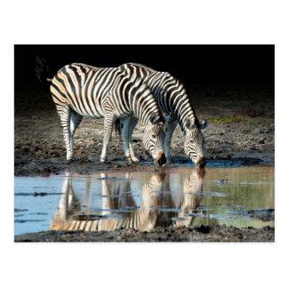 L'Afrique, Botswana, delta d'Okavango, camp de Carte Postale