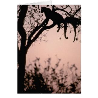 L'Afrique, Botswana, delta d'Okavango. Léopard Carte De Vœux