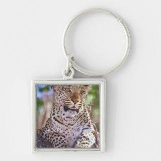 L'Afrique, Botswana, delta d'Okvango, léopard sauv Porte-clefs