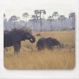 L'AFRIQUE, Botswana, éléphant africain Tapis De Souris