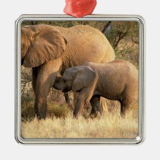 L'Afrique, Botswana, Moremi. Soins d'éléphant Ornement Carré Argenté