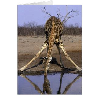 L'Afrique, Botswana, parc national de Chobe, Carte De Vœux