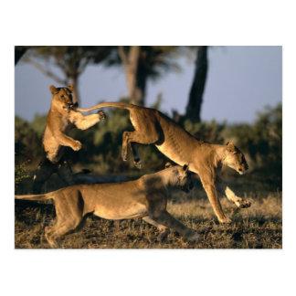 L'Afrique, Botswana, parc national de Chobe, Cartes Postales