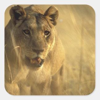 L'Afrique, Botswana, réservation de jeu de Moremi, Sticker Carré