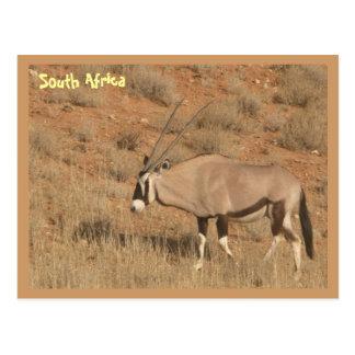 L'Afrique du Sud Cartes Postales