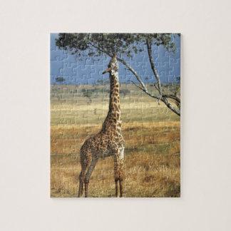 L'Afrique, Kenya, Amboseli NP. Un terrain communal Puzzle