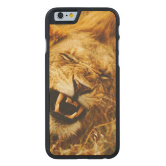 L'Afrique, Kenya, Maasai Mara. Lion masculin. Coque Carved® iPhone 6 En Érable
