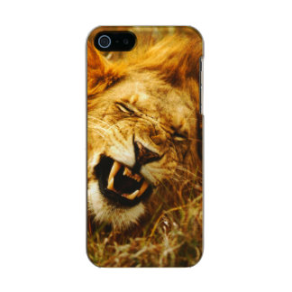 L'Afrique, Kenya, Maasai Mara. Lion masculin. Coque iPhone 5 Incipio Feather® Shine