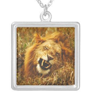 L'Afrique, Kenya, Maasai Mara. Lion masculin. Pendentif Carré