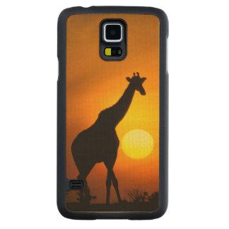 L'Afrique, Kenya, masai Mara. Girafe (girafe Coque Galaxy S5 En Érable