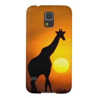 L'Afrique, Kenya, masai Mara. Girafe (girafe Protections Galaxy S5