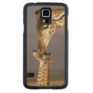 L'Afrique, Kenya, masai Mara. Girafes (girafe Coque Galaxy S5 En Érable