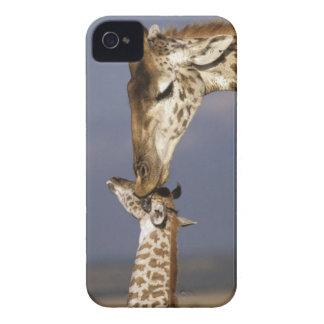 L'Afrique, Kenya, masai Mara. Girafes (girafe Coque iPhone 4 Case-Mate