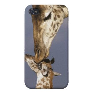 L'Afrique, Kenya, masai Mara. Girafes (girafe Coques iPhone 4