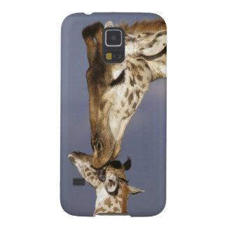 L'Afrique, Kenya, masai Mara. Girafes (girafe Coques Pour Galaxy S5