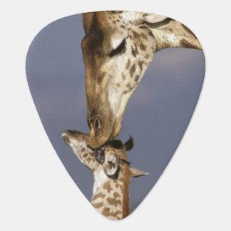 L'Afrique, Kenya, masai Mara. Girafes (girafe Onglet De Guitare