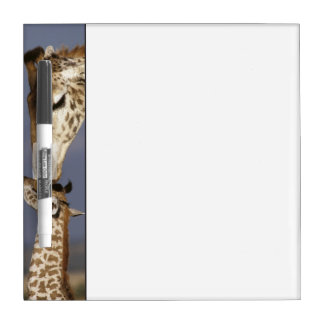 L'Afrique, Kenya, masai Mara. Girafes (girafe Tableaux Effaçables Blancs