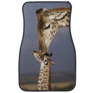 L'Afrique, Kenya, masai Mara. Girafes (girafe Tapis De Sol
