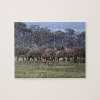 L'Afrique, Kenya, parc national d'Amboseli. Africa Puzzle