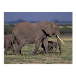 L'Afrique, Kenya, parc national d'Amboseli. Carte Postale
