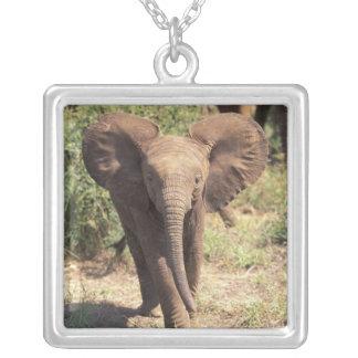 L'Afrique, Kenya, parc national d'Amboseli. Pendentif Carré