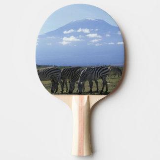L'Afrique, Kenya, parc national d'Amboseli, Raquette De Ping Pong