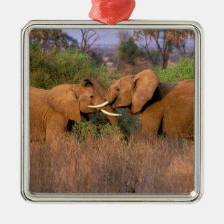 L'Afrique, Kenya, Samburu. Défi d'éléphant Ornement Carré Argenté