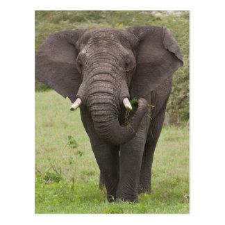 L'Afrique. La Tanzanie. Éléphant au cratère de Carte Postale