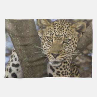 L'Afrique. La Tanzanie. Léopard dans l'arbre chez Serviettes Éponge