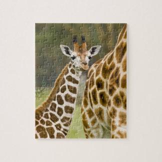 L'Afrique. Le Kenya. Bébé de la girafe de Rothschi Puzzle