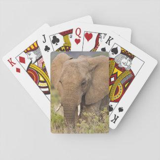 L'Afrique. Le Kenya. Éléphant chez Samburu NP Cartes À Jouer