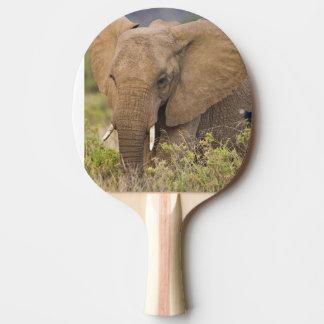L'Afrique. Le Kenya. Éléphant chez Samburu NP Raquette De Ping Pong