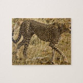 L'Afrique. Le Kenya. Guépard chez Samburu NP Puzzle