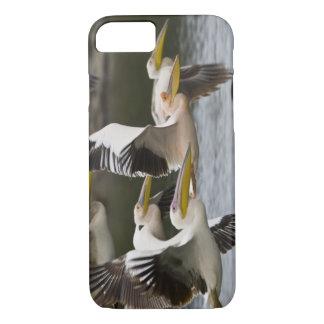 L'Afrique. Le Kenya. Pélicans blancs en vol au lac Coque iPhone 7