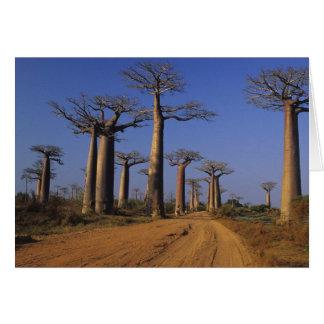 L'Afrique, Madagascar, Morondava, avenue de baobab Carte De Vœux