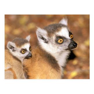 L'Afrique, Madagascar, réservation privée de Cartes Postales