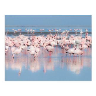 L'Afrique, Namibie, baie de Walvis Carte Postale