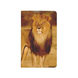 L'Afrique, Namibie, Okonjima. Lion masculin Carnet De Poche