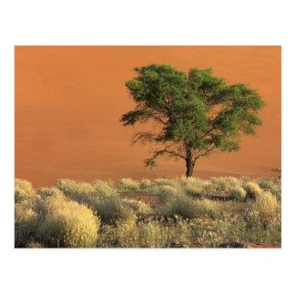 L'Afrique, Namibie, parc national de Namib, Carte Postale