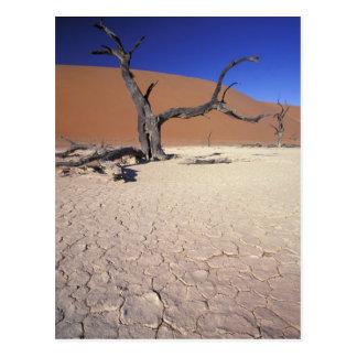 L'Afrique, Namibie, région de Sossusvlei. Dunes de Carte Postale