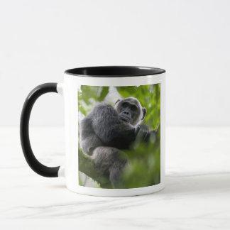 L'Afrique, Ouganda, réservation de forêt de Mug