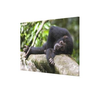 L'Afrique, Ouganda, réservation de forêt de Toiles