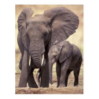 L'Afrique, Tanzanie, parc national de Tarangire. 2 Cartes Postales