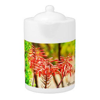 L'agave orange fleurit pot de thé